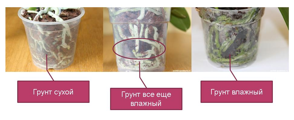 Как поливать орхидею в домашних условиях как часто
