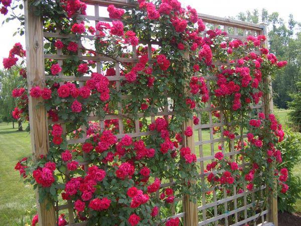 Самодельная опора для плетистых растений