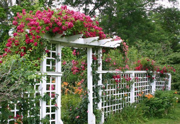 Деревянная пергола для роз