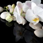 Уход за белой орхидеей