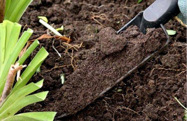 В качестве субстрата можно использовать смесь дерновой земли