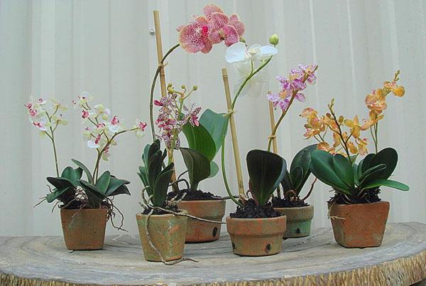 Глиняный горшок для орхидеи