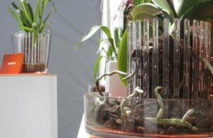 Правильный горшок для орхидеи