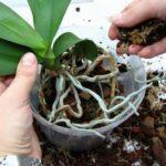 Выбор правильного грунта для орхидеи