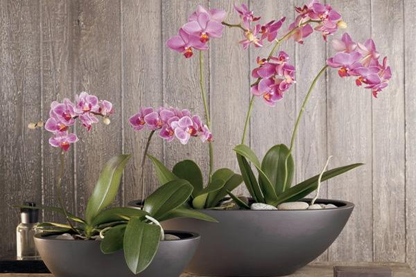 Керамическое кашпо для орхидеи