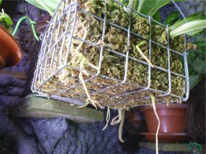 Металлическая корзина для орхидеи
