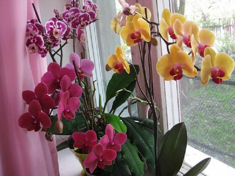 Чтобы орхидея зацвела ее надо напугать, переставив в холодное место