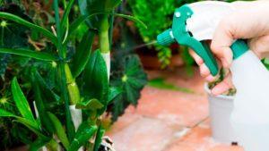 Для повышения влажности орхидеи опрыскивают