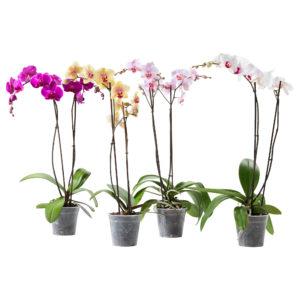 Примеры пластиковых горшков для выращивания орхидей