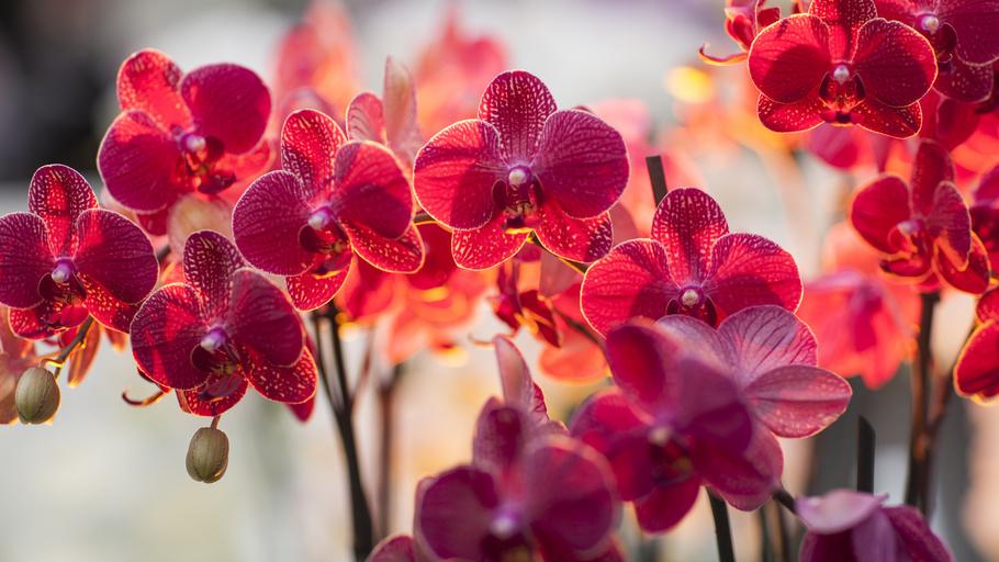 Для нормального цветения орхидеи следует обеспечить хорошее освещение