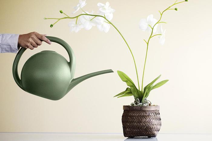 Полив орхидеи должен быть обильным, но не частым