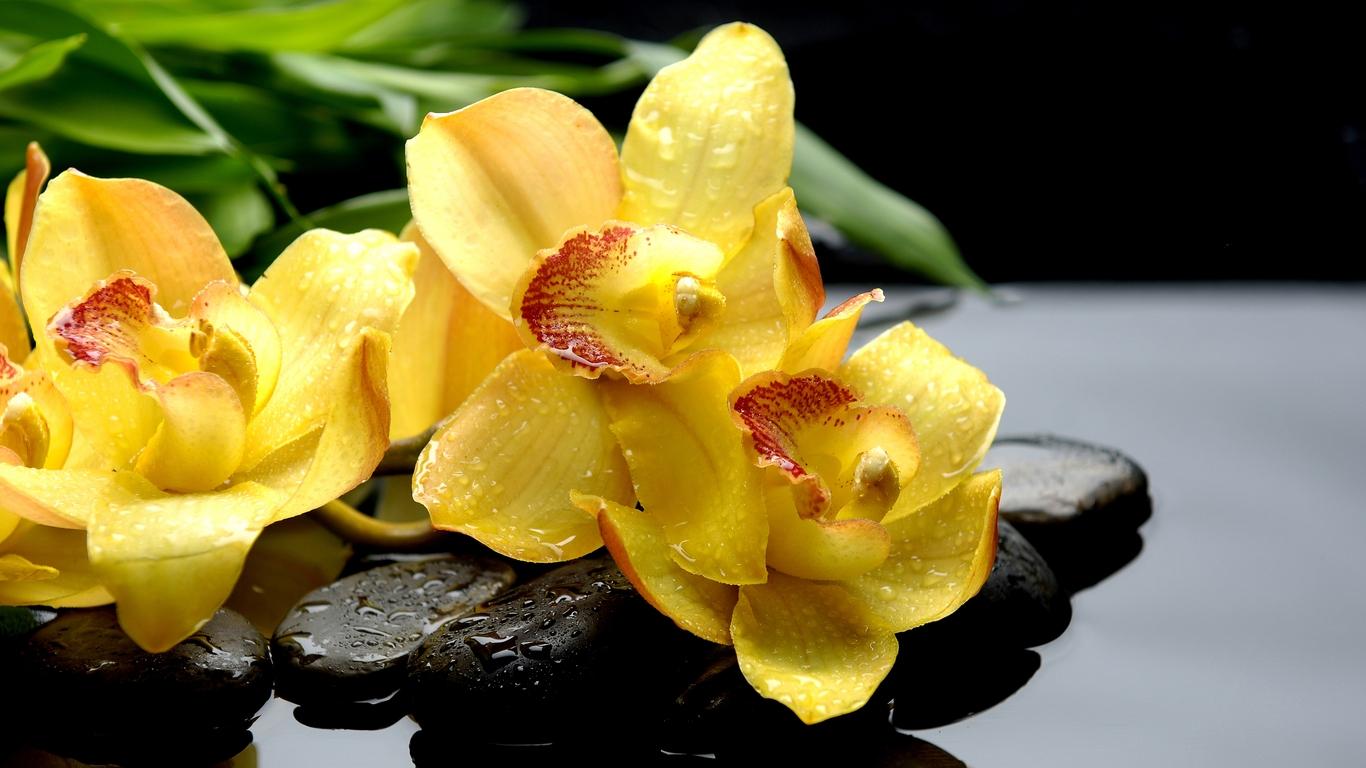 Желтой орхидее не требуется частый полив