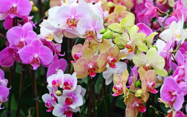 Разновидности растений семейства орхидей