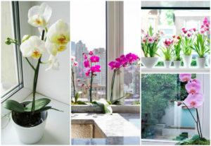 Орхидеям нужно много солнечного света
