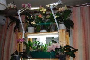 Орхидеи требуют дополнительного освещения