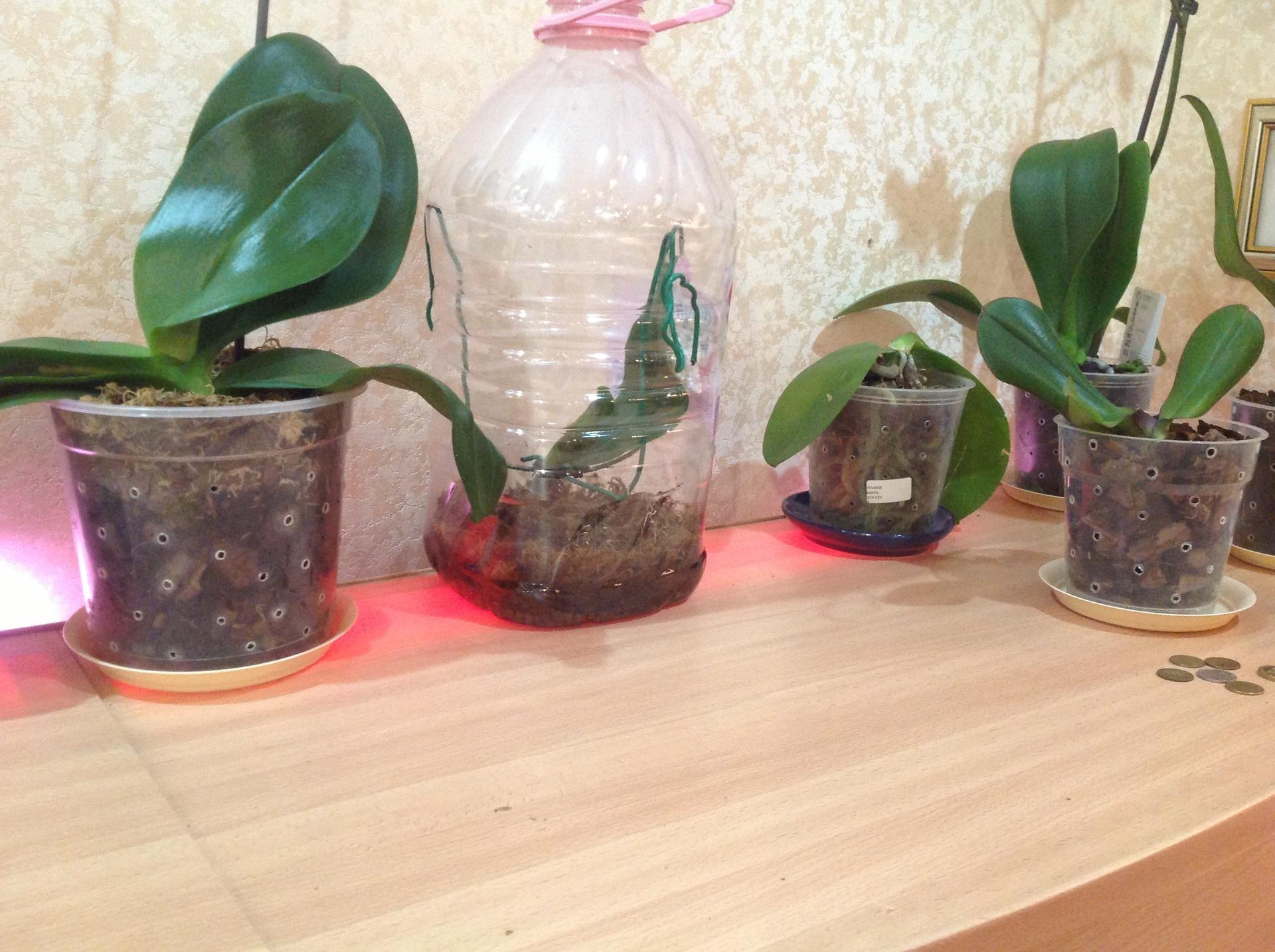 Пример теплички для орхидеи