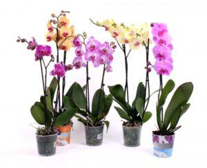 Вазоны для выращивания орхидей