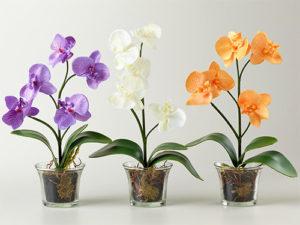 Виды горшков для орхидей