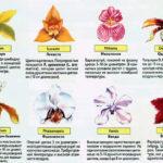 Виды орхидей в природе