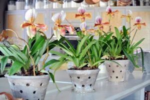 При цветении следует учитывать возраст растения