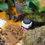 Субстрат для орхидеи можно изготовить дома
