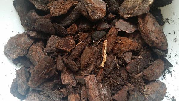 Субстрат следует очистить от насекомых и грязи