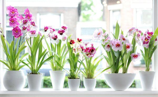 Пластиковые горшки лучше подходят для орхидей