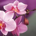 В мире существует множество видов орхидей