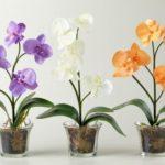Цветущую орхидею можно пересаживать