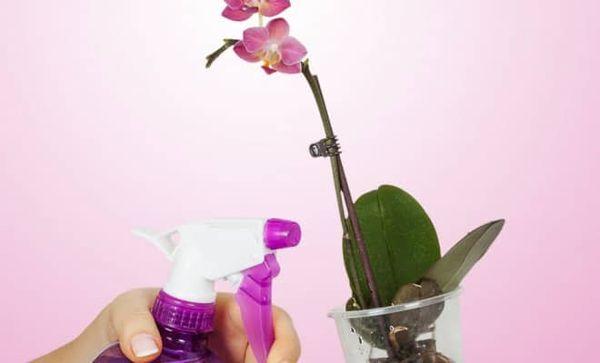 Внекорневая подкормка не должна попадать на цветки