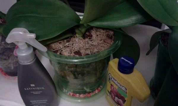 Избыток удобрений крайне опасен для орхидей