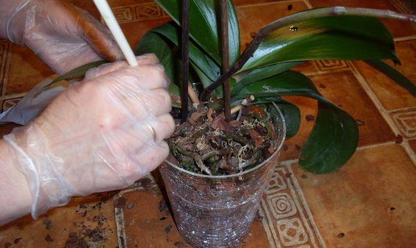 Нельзя удобрять больные растения