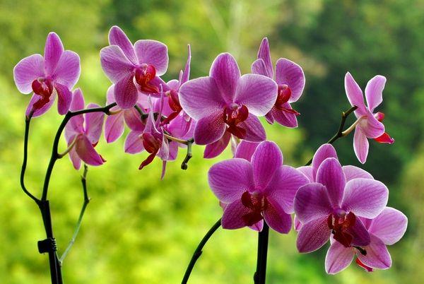 При правильном подходе орхидея вернется к жизни