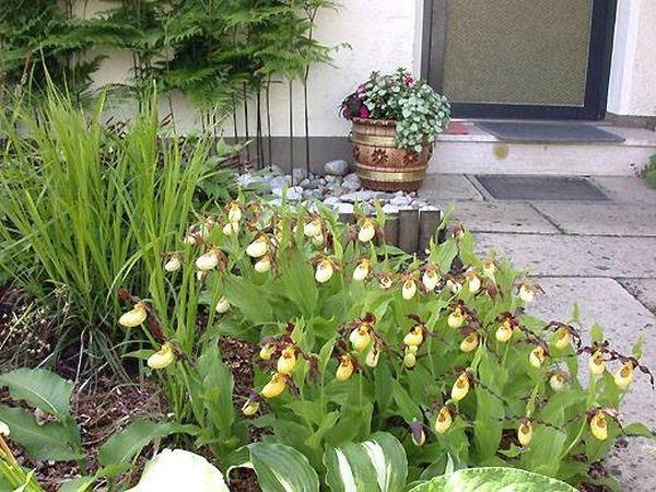Невероятный цветущий сад орхидей