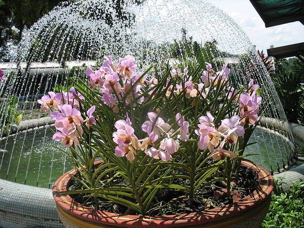 Все виды орхидных растений являются долгожителями