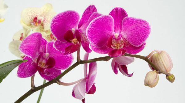 Во время цветения нельзя применять эту подкормку