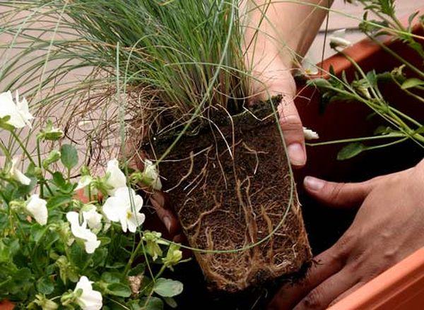 Не стоит пересаживать растения в осенне-зимний период