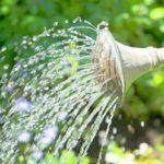 Правильныйполив –важный пункт ухода за растениями