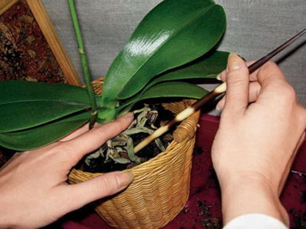 Растение подвергнуто нападению различных вредителей