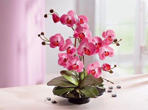 Среднийсрокжизни цветка не превышает 4–5 лет