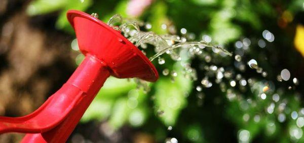 Переувлажнение грунта может негативно отразиться на растении
