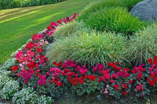 Бордюрные розы – это удивительные декоративные кусты
