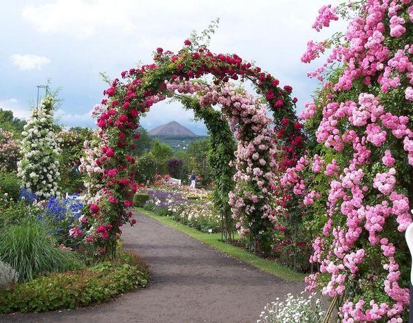 Простоя арка для плетистых растений