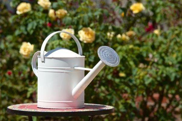 В осенний период не рекомендуется обильно поливать растения