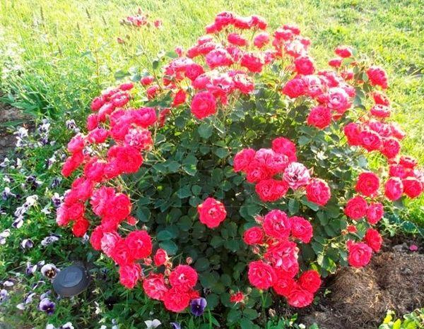 Если роза превратилась в шиповник, то это уже не изменить