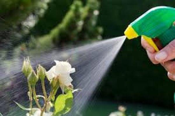 Внекорневая весенняя подкормка растений