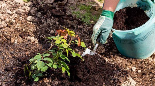Не стоит забывать про мульчирование почвы