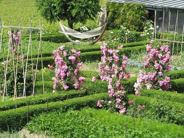 Розам для роста необходимы опоры