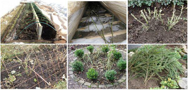 Способы укрытия цветов на зиму