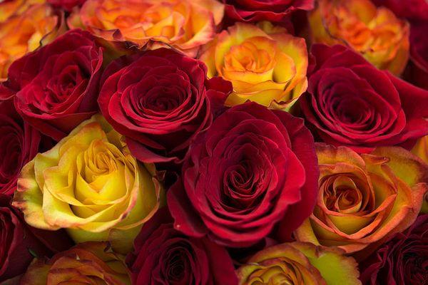 Желтые иоранжевые розы